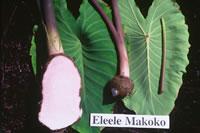 Eleele Makoko