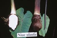 Niue-ulaula