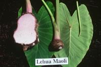 Lehua Maoli