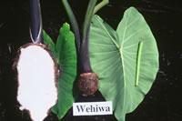 Wehiwa