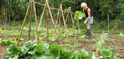 General Gardening Articles