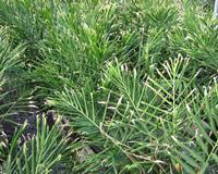 maui crop production services