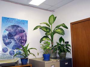 office plants no sunlight office plants no sunlight