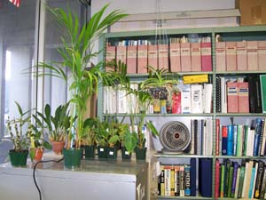 Growing Plants Indoors Under Supplemental Lighting