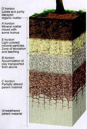 within the profile of a typical forest soil forests soils tend to haveForest Soil Profile