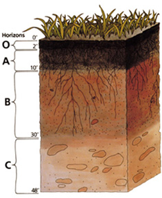 Soil management for What do you mean by soil
