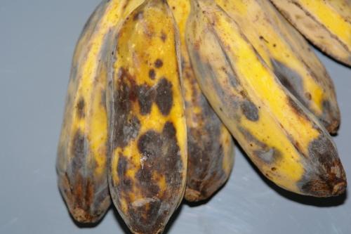 anthracnose_cooking_banana2.JPG