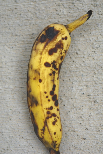 http://www.ctahr.hawaii.edu/nelsons/banana/banana_anthracnose_fruit.JPG