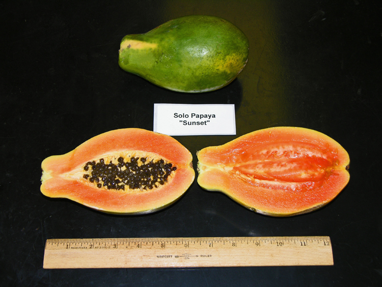 Agricultural diagnostic service center seed program
