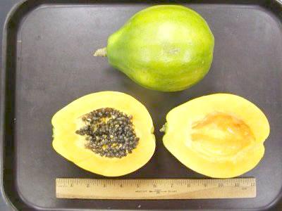 Waimanalo papaya x 77 is a yellow flesh solo papaya which bears low