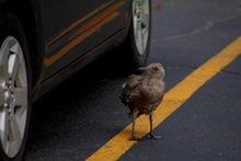 Bird next to car