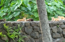 Cat colony at UH-Manoa