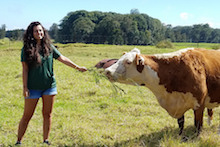 Student feeding cow