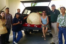 Giant pumpkin with Hilo 4-H group