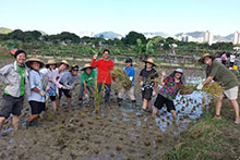 CTAHR students working in the fields on the Hong Kong study tour