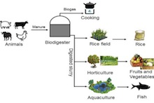 Graphic showing how household digesters provide several products