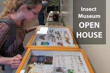Student at Insect Museum open house