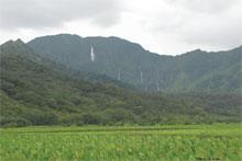 Kauai farm