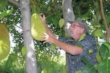 Ken Love checks fruit