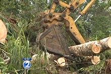 Clean up efforts on the Big Island
