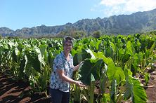 Maria Gallo with taro at Waimanalo Research Station