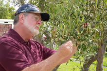 Marshall Johnson examining plants