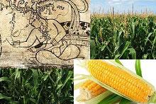 Image for seminar on Maya civilization and corn