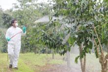 Person spraying pesticides
