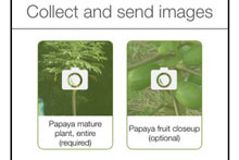 Image from the Pic-a-Papaya app