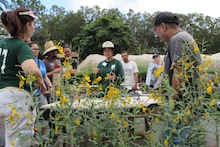 Koon-Hui Wang at Field Day at Poamoho