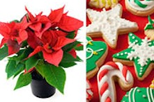 Poinsettia plant and Christmas cookies