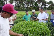 Tea Field Day