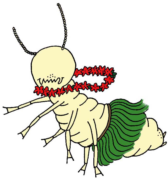 Related Keywords & Suggestions for termites habitat Queen Termite Anatomy
